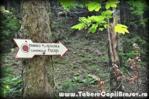 taberecopiibrasov7 scari (17a)