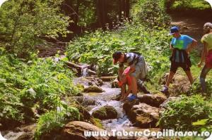 taberecopiibrasov7 scari (33)